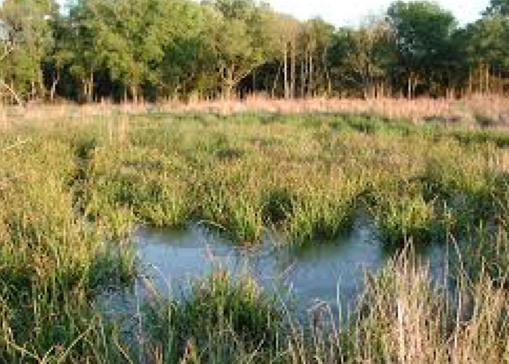 Sams Lake Wetland Mitigation